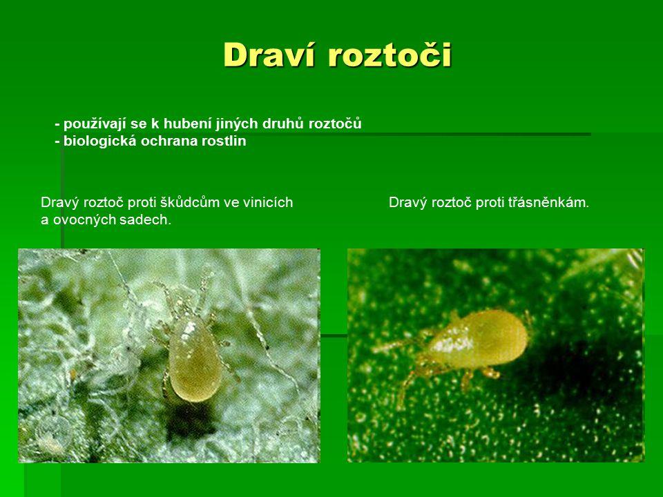 Draví roztoči - používají se k hubení jiných druhů roztočů - biologická ochrana rostlin Dravý roztoč proti škůdcům ve vinicích a ovocných sadech. Drav