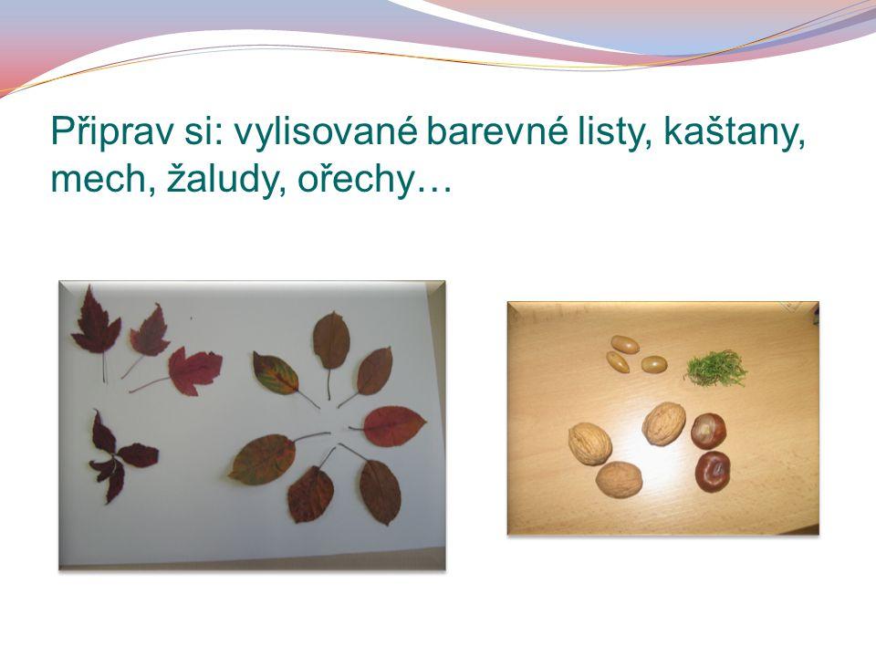 Připrav si: vylisované barevné listy, kaštany, mech, žaludy, ořechy…