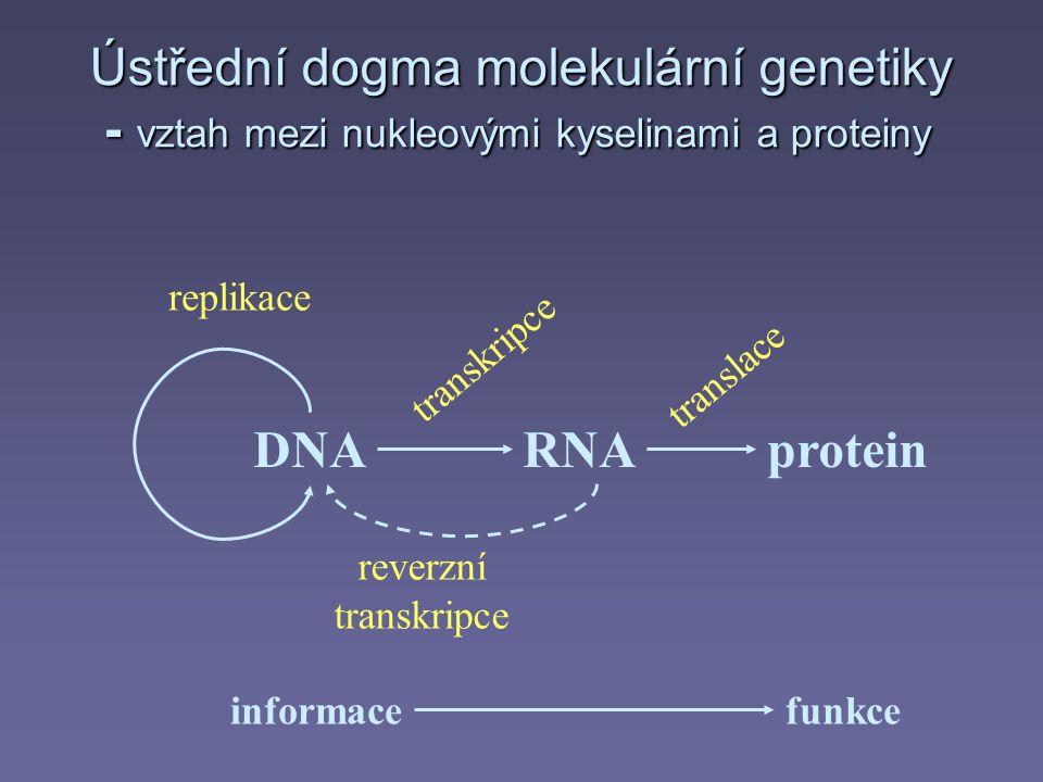 DNARNAprotein transkripce reverzní transkripce translace replikace informacefunkce Ústřední dogma molekulární genetiky - vztah mezi nukleovými kyselin
