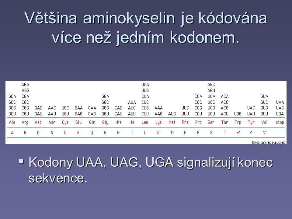 Většina aminokyselin je kódována více než jedním kodonem.  Kodony UAA, UAG, UGA signalizují konec sekvence.