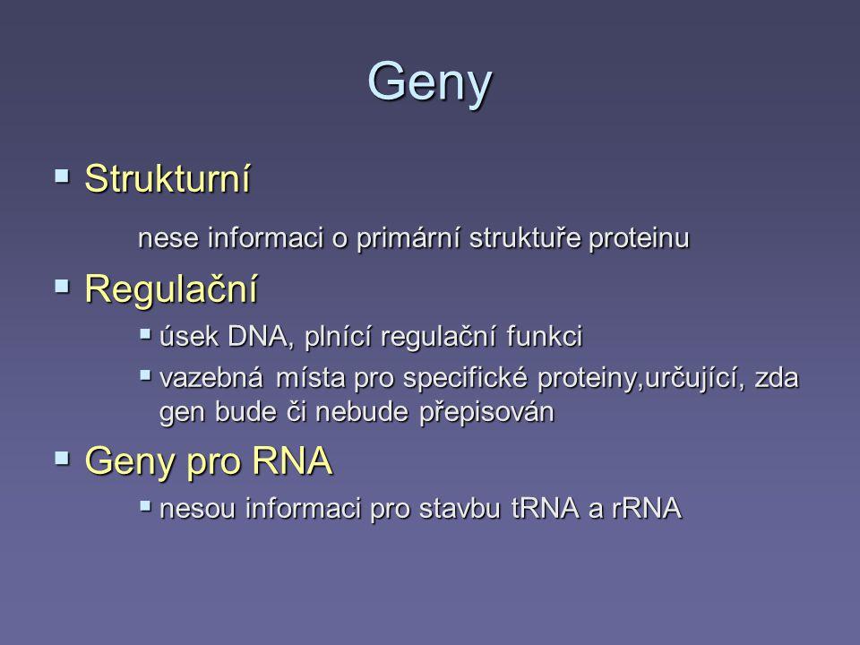 Geny  Strukturní nese informaci o primární struktuře proteinu  Regulační  úsek DNA, plnící regulační funkci  vazebná místa pro specifické proteiny,určující, zda gen bude či nebude přepisován  Geny pro RNA  nesou informaci pro stavbu tRNA a rRNA