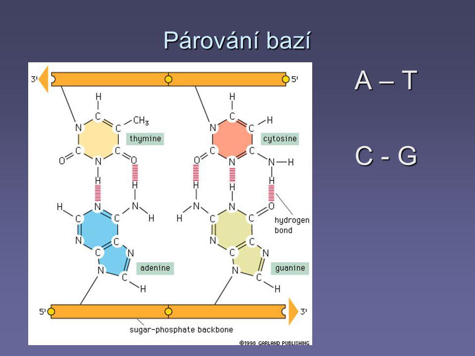 Chemická struktura RNA © Espero Publishing, s.r.o.
