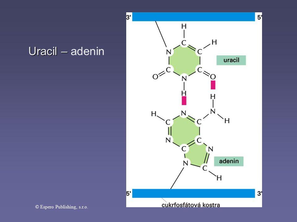 Uracil – Uracil – adenin © Espero Publishing, s.r.o.
