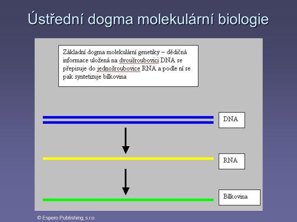 DNARNAprotein transkripce reverzní transkripce translace replikace informacefunkce Ústřední dogma molekulární genetiky - vztah mezi nukleovými kyselinami a proteiny