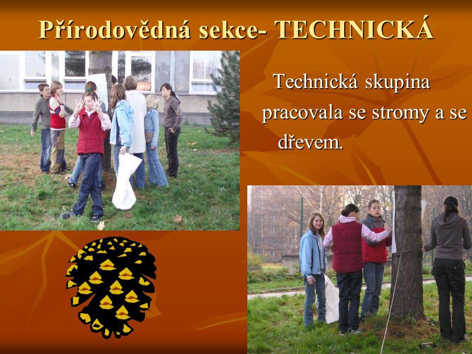Přírodovědná sekce- TECHNICKÁ Technická skupina Technická skupina pracovala se stromy a se pracovala se stromy a se dřevem. dřevem.