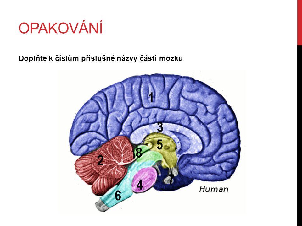OPAKOVÁNÍ Doplňte k číslům příslušné názvy částí mozku