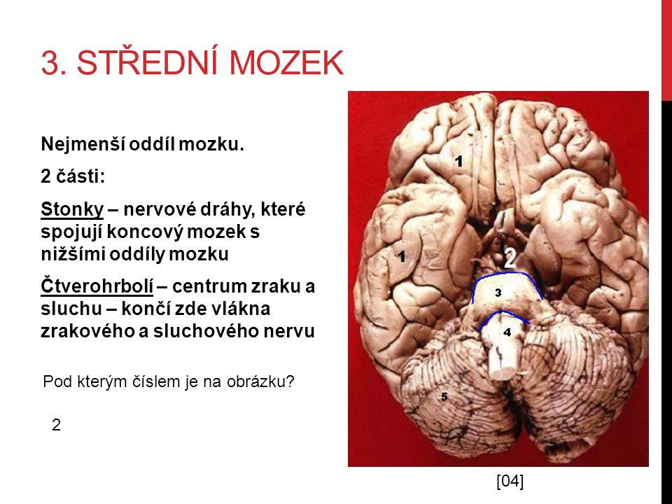 3. STŘEDNÍ MOZEK Nejmenší oddíl mozku. 2 části: Stonky – nervové dráhy, které spojují koncový mozek s nižšími oddíly mozku Čtverohrbolí – centrum zrak