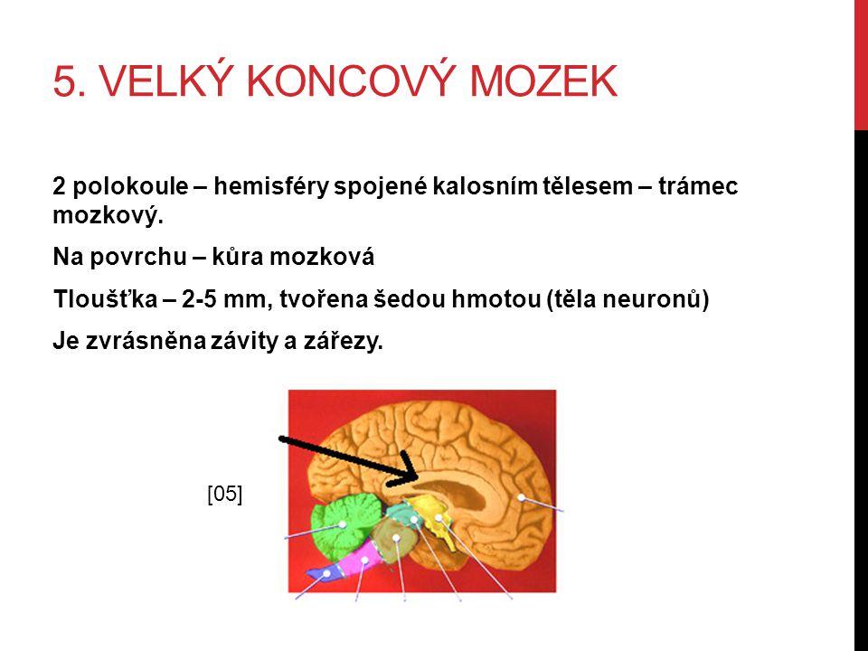 5. VELKÝ KONCOVÝ MOZEK 2 polokoule – hemisféry spojené kalosním tělesem – trámec mozkový. Na povrchu – kůra mozková Tloušťka – 2-5 mm, tvořena šedou h