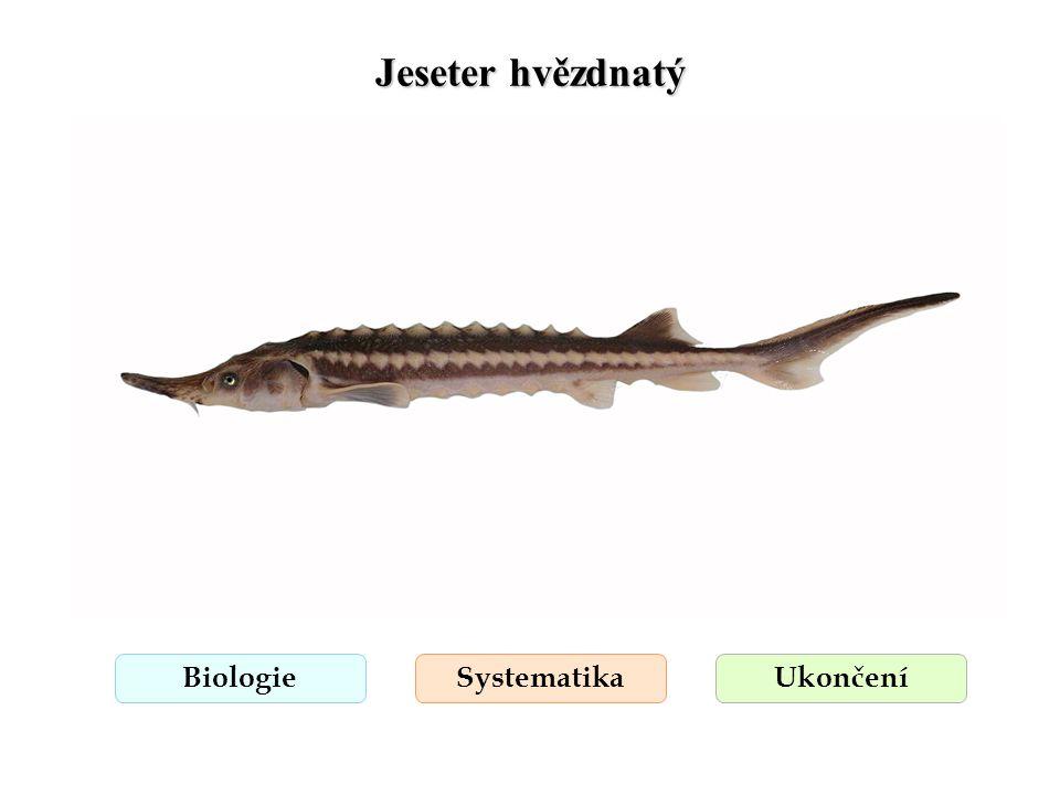 Jeseter sibiřský BiologieSystematikaUkončení