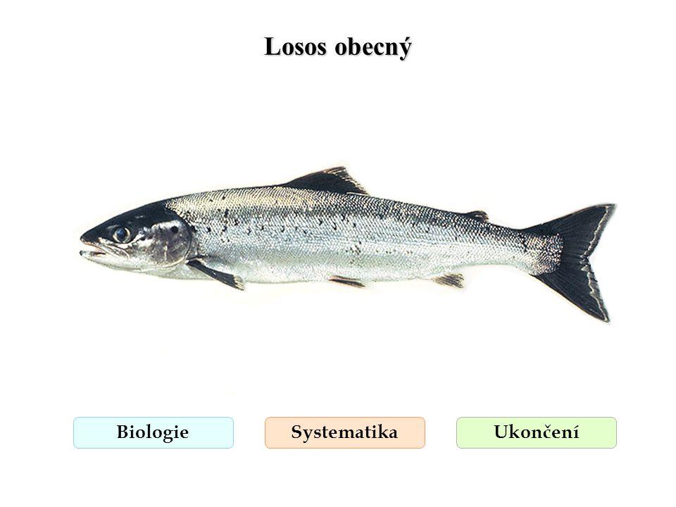 Pstruh obecný forma potoční BiologieSystematikaUkončení