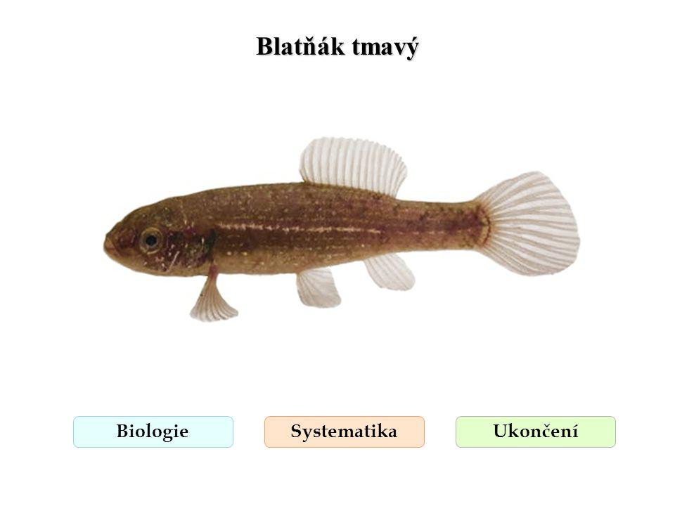 Blatňák tmavý BiologieSystematikaUkončení