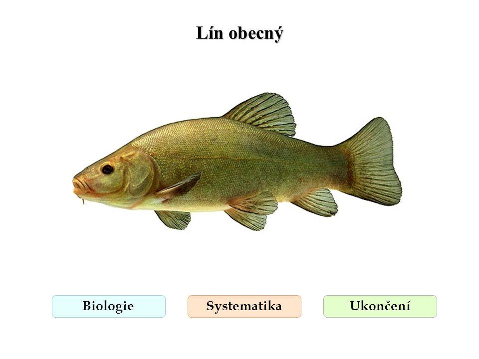 Lín obecný BiologieSystematikaUkončení