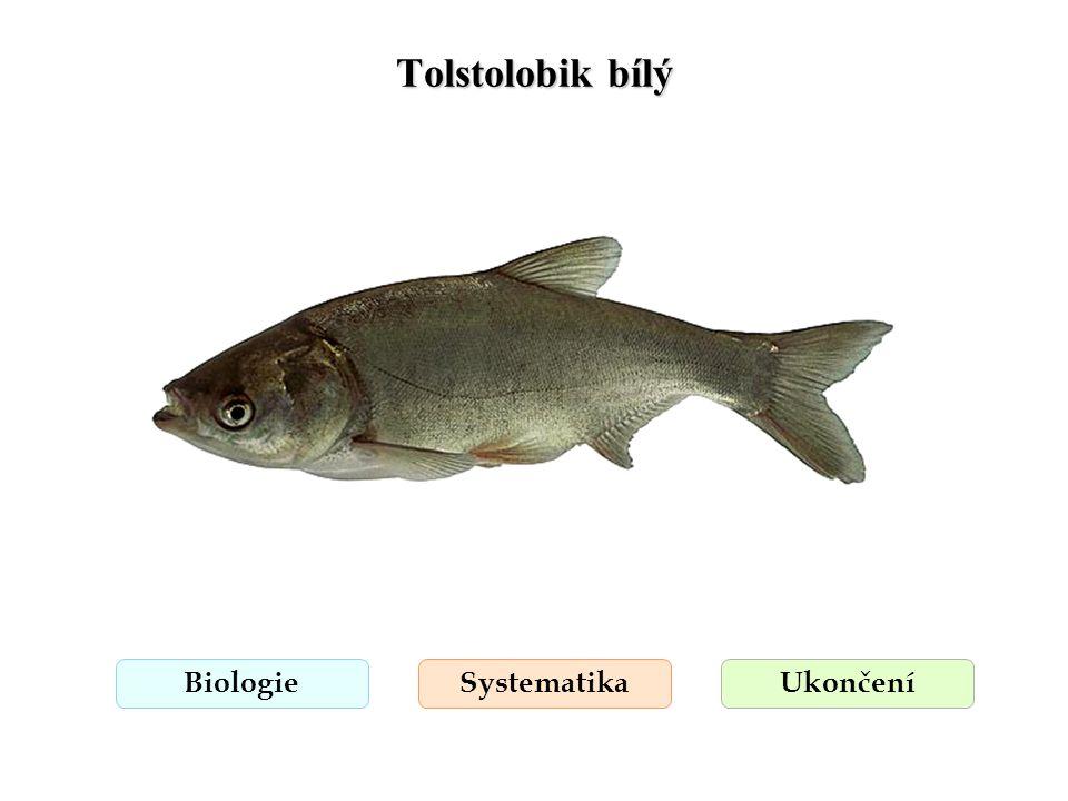Tolstolobik bílý BiologieSystematikaUkončení