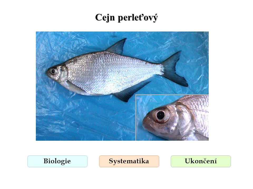 Cejn perleťový BiologieSystematikaUkončení