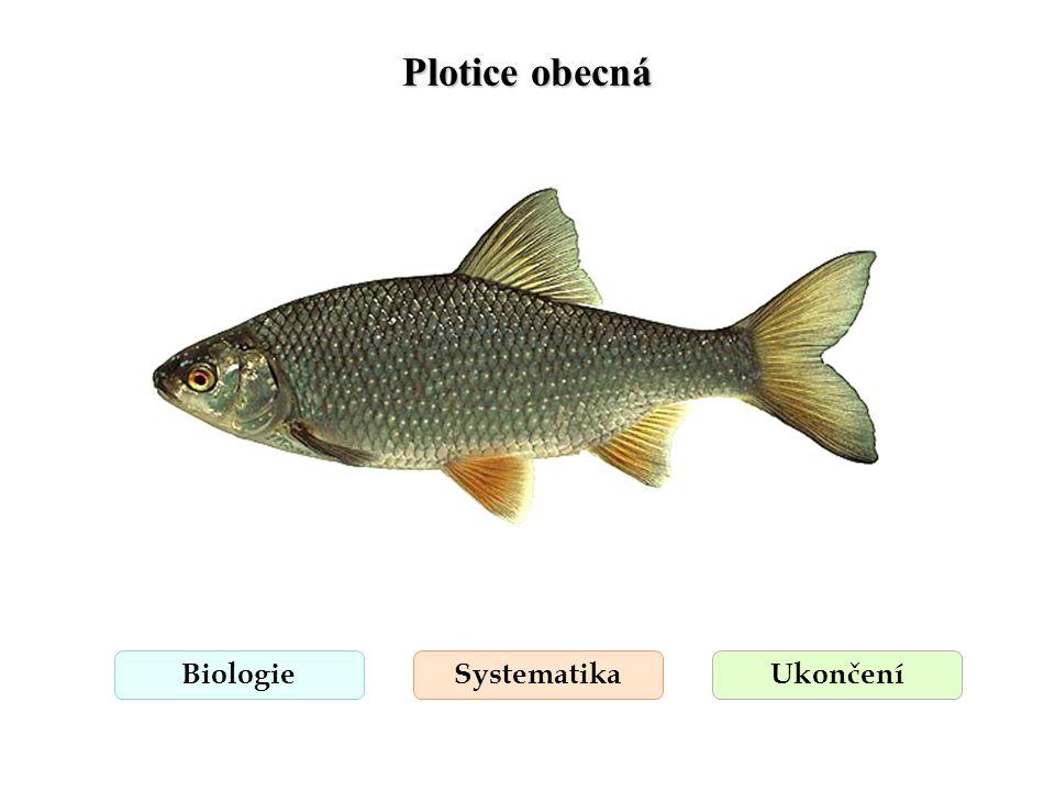 Plotice obecná BiologieSystematikaUkončení