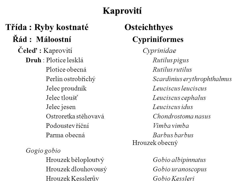 Kaprovití Třída : Ryby kostnatéOsteichthyes Řád : MáloostníCypriniformes Čeleď : KaprovitíCyprinidae Druh : Plotice leskláRutilus pigus Plotice obecná