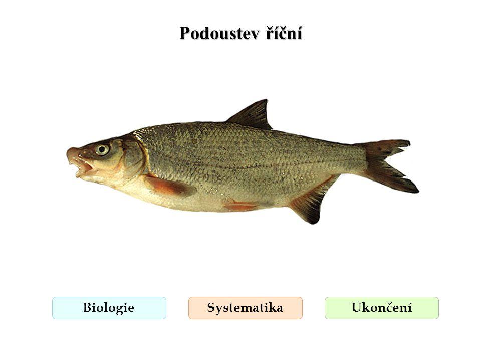 Podoustev říční BiologieSystematikaUkončení