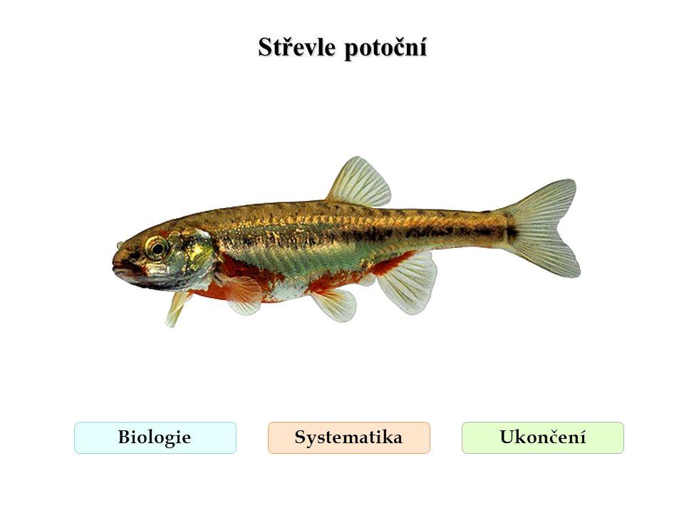 Střevlička východní BiologieSystematikaUkončení