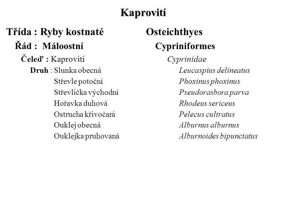 Kaprovití Třída : Ryby kostnatéOsteichthyes Řád : MáloostníCypriniformes Čeleď : KaprovitíCyprinidae Druh :Slunka obecnáLeucaspius delineatus Střevle