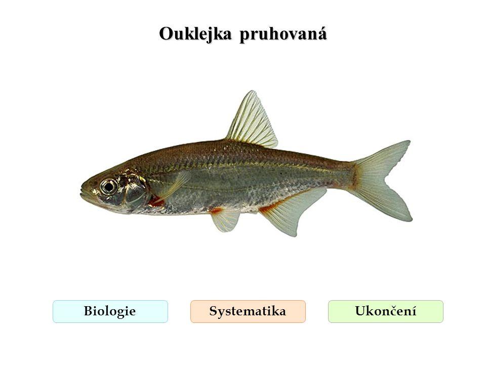 Ouklejka pruhovaná BiologieSystematikaUkončení