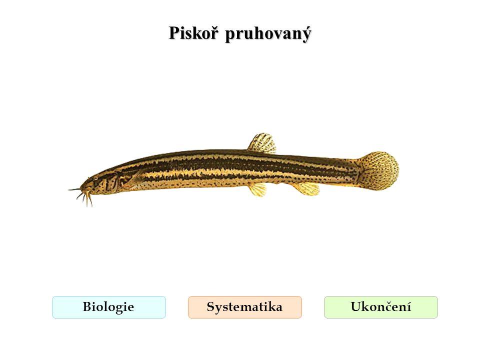 Piskoř pruhovaný BiologieSystematikaUkončení