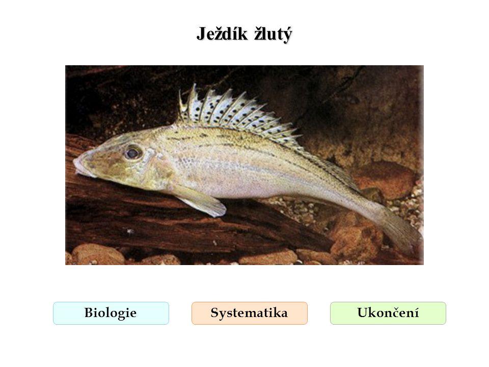 Ježdík žlutý BiologieSystematikaUkončení