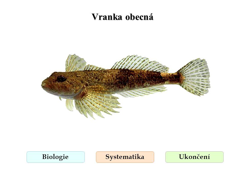Vranka obecná BiologieSystematikaUkončení