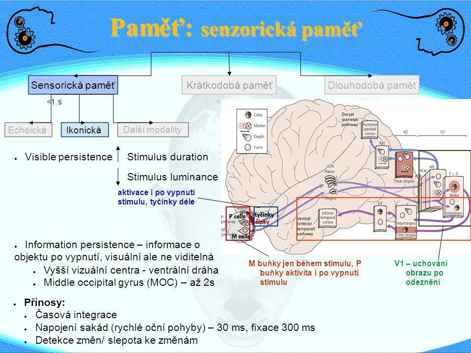 Echoická Paměť: senzorická paměť Sensorická paměťDlouhodobá paměťKrátkodobá paměť <1 s<1 min Life-time Ikonická Další modality ● Visible persistenceStimulus duration Stimulus luminance M buňky jen během stimulu, P buňky aktivita i po vypnutí stimulu ● Information persistence – informace o objektu po vypnutí, visuální ale ne viditelná ● Vyšší vizuální centra - ventrální dráha ● Middle occipital gyrus (MOC) – až 2s ● Přínosy: ● Časová integrace ● Napojení sakád (rychlé oční pohyby) – 30 ms, fixace 300 ms ● Detekce změn/ slepota ke změnám aktivace i po vypnutí stimulu, tyčinky déle V1 – uchování obrazu po odeznění