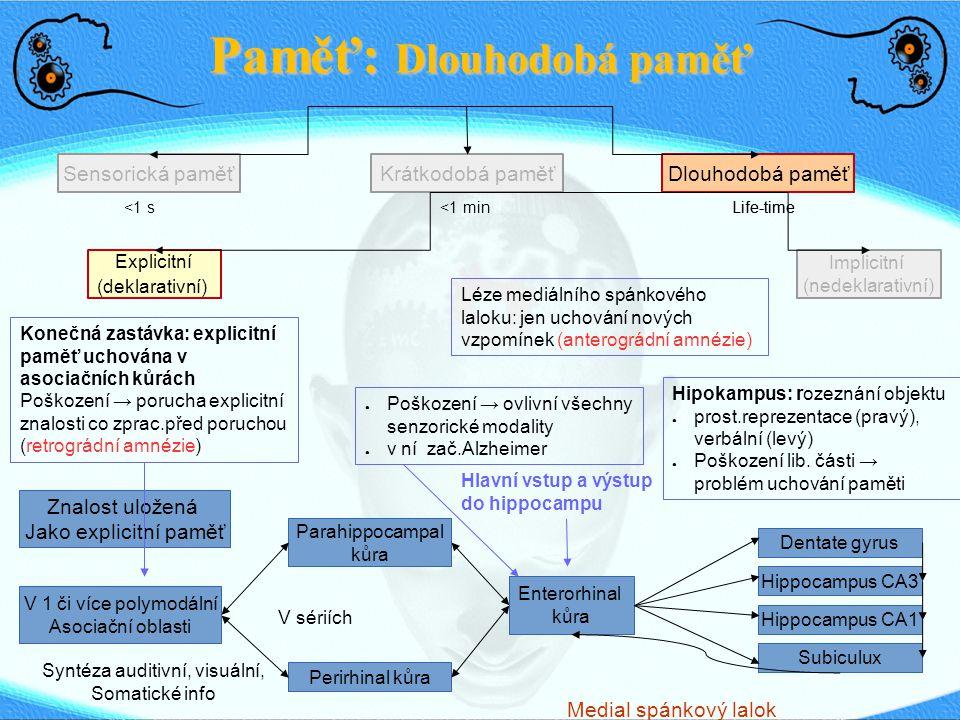 Paměť: Dlouhodobá paměť Sensorická paměťDlouhodobá paměťKrátkodobá paměť <1 s <1 min Life-time Explicitní (deklarativní) Implicitní (nedeklarativní) Znalost uložená Jako explicitní paměť V 1 či více polymodální Asociační oblasti Syntéza auditivní, visuální, Somatické info Parahippocampal kůra Perirhinal kůra V sériích Enterorhinal kůra Dentate gyrus Hippocampus CA3 Hippocampus CA1 Subiculux Hlavní vstup a výstup do hippocampu ● Poškození → ovlivní všechny senzorické modality ● v ní zač.Alzheimer Medial spánkový lalok Hipokampus: rozeznání objektu ● prost.reprezentace (pravý), verbální (levý) ● Poškození lib.