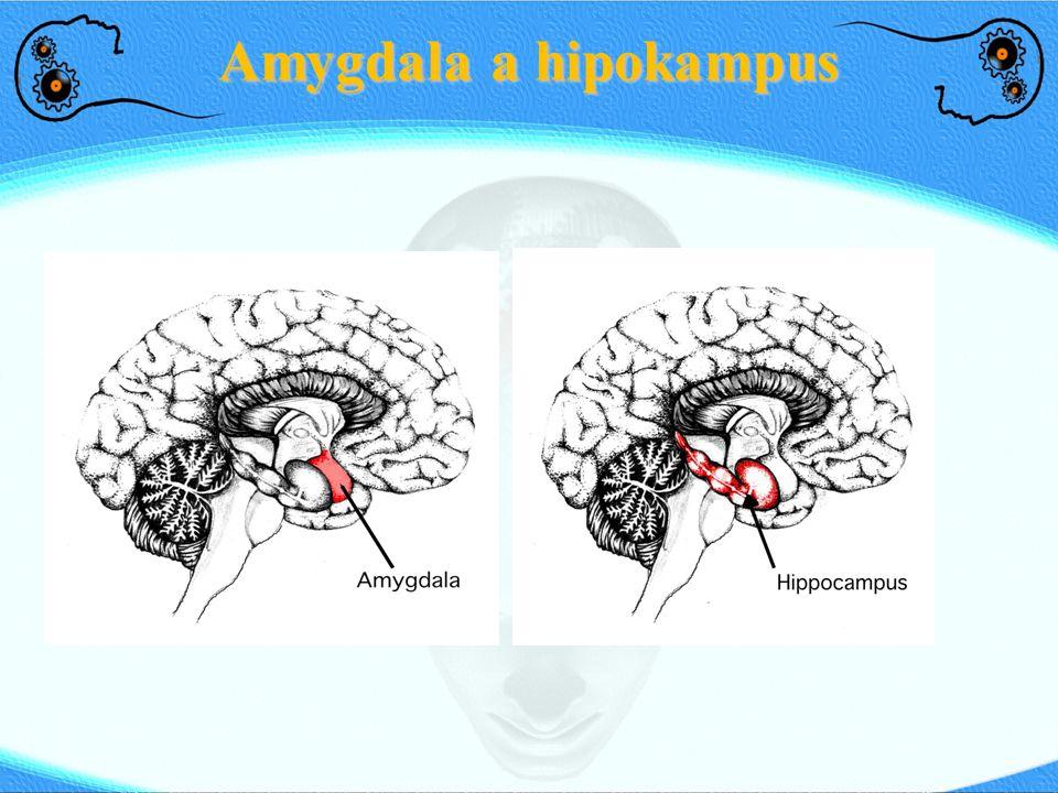 Amygdala a hipokampus