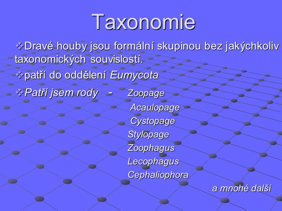 Taxonomie  Dravé houby jsou formální skupinou bez jakýchkoliv taxonomických souvislostí.  patří do oddělení Eumycota  Patří jsem rody - Zoopage Aca