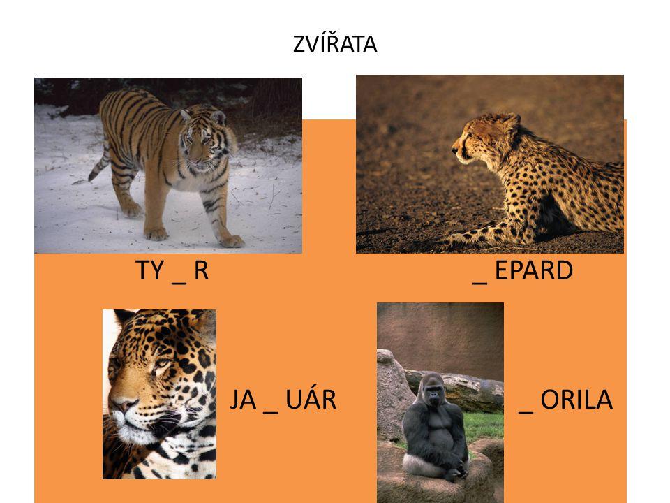 ZVÍŘATA TY _ R _ EPARD JA _ UÁR _ ORILA