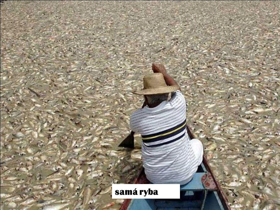 samá ryba