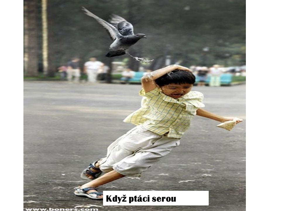 Kdy ž ptáci serou