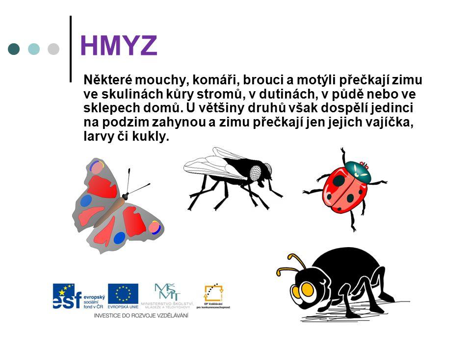 HMYZ Některé mouchy, komáři, brouci a motýli přečkají zimu ve skulinách kůry stromů, v dutinách, v půdě nebo ve sklepech domů. U většiny druhů však do