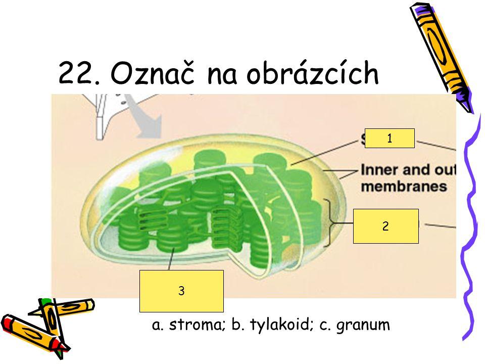 21. Útvar na obrázku je a.hladké ER b.jádro c.Golgiho aparát d.drsné ER e.vakuola