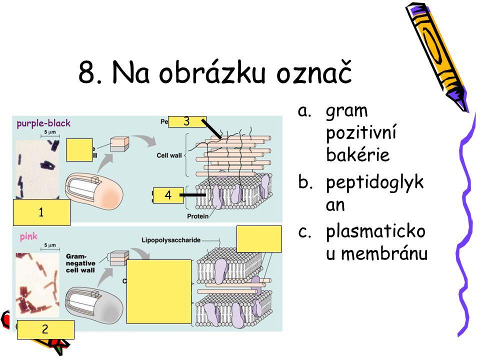 7. Na obrázku vidíme a.exosporu b.endosporu c.plasmid d.první fázi rozmnožování baktérie e.ani jedna z odpovědí není správná