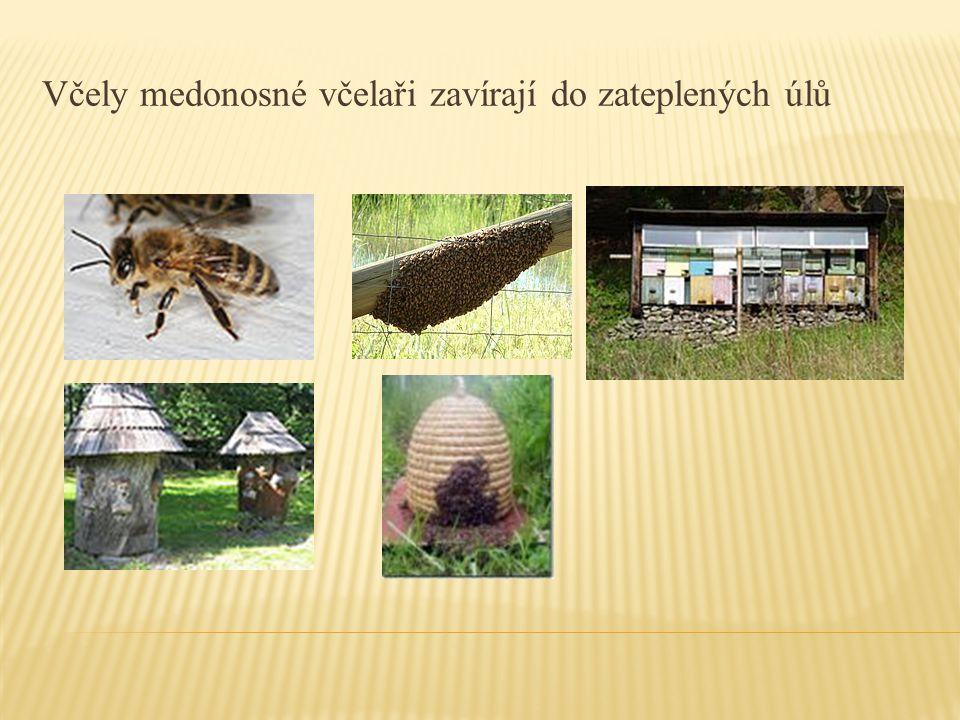 Včely medonosné včelaři zavírají do zateplených úlů