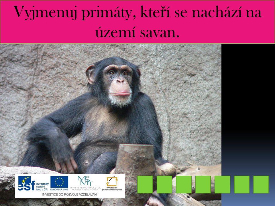 Vyjmenuj primáty, kte ř í se nachází na území savan. IMPANZŠ