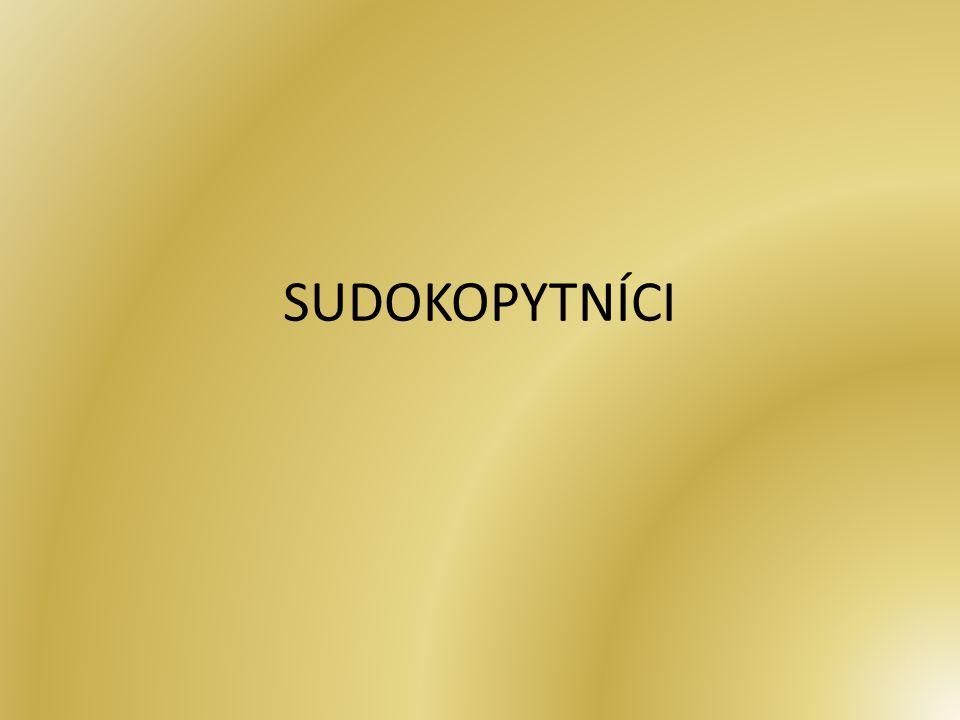 U sudokopytníků prochází osa končetin dvěma prsty – 3.
