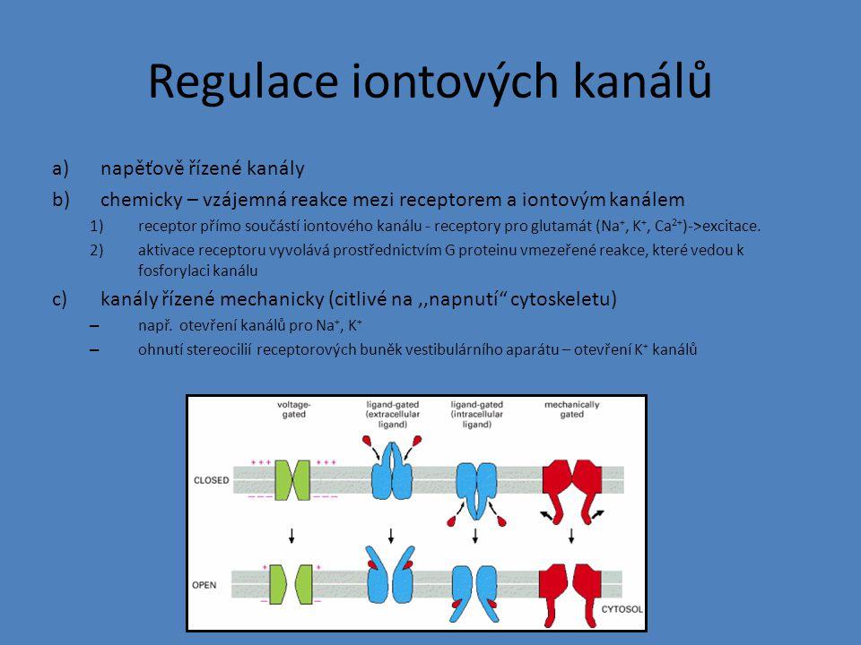 Regulace iontových kanálů a)napěťově řízené kanály b)chemicky – vzájemná reakce mezi receptorem a iontovým kanálem 1)receptor přímo součástí iontového