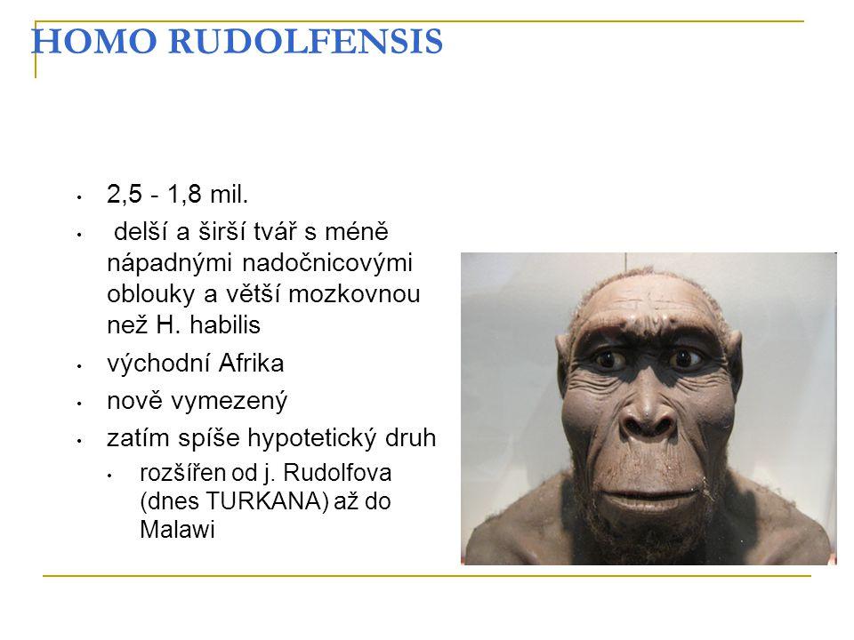 HOMO RUDOLFENSIS 2,5 - 1,8 mil. delší a širší tvář s méně nápadnými nadočnicovými oblouky a větší mozkovnou než H. habilis východní Afrika nově vymeze