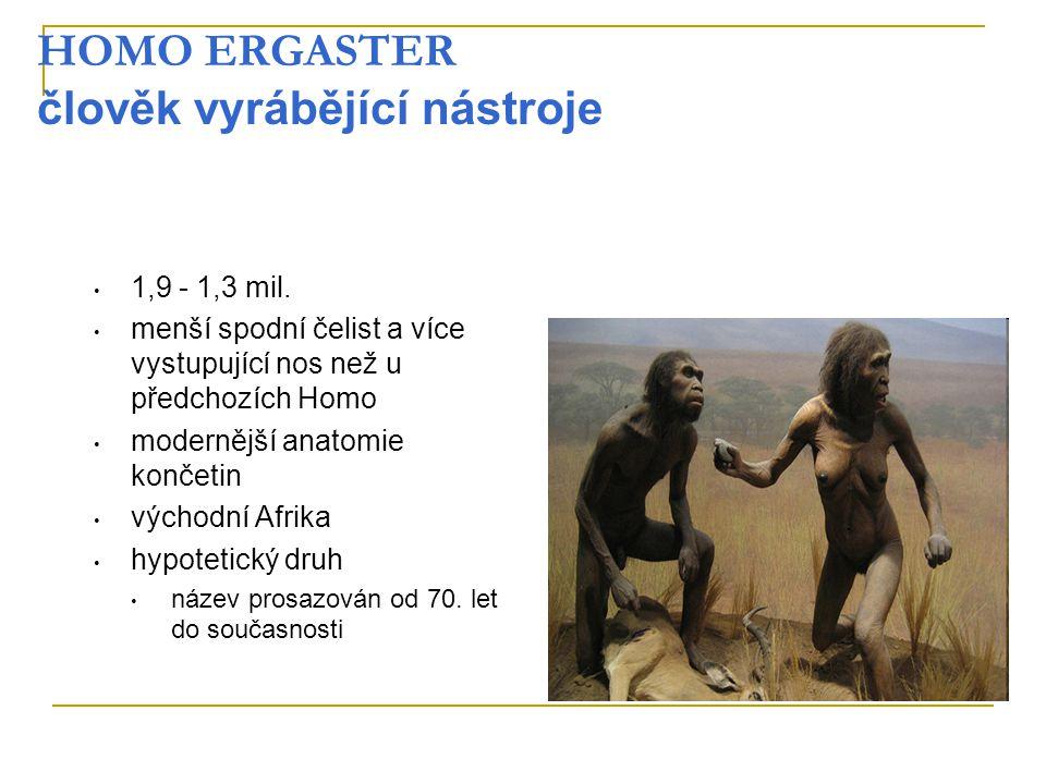 HOMO ERGASTER člověk vyrábějící nástroje 1,9 - 1,3 mil. menší spodní čelist a více vystupující nos než u předchozích Homo modernější anatomie končetin