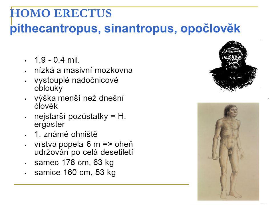 HOMO ERECTUS pithecantropus, sinantropus, opočlověk 1,9 - 0,4 mil. nízká a masivní mozkovna vystouplé nadočnicové oblouky výška menší než dnešní člově