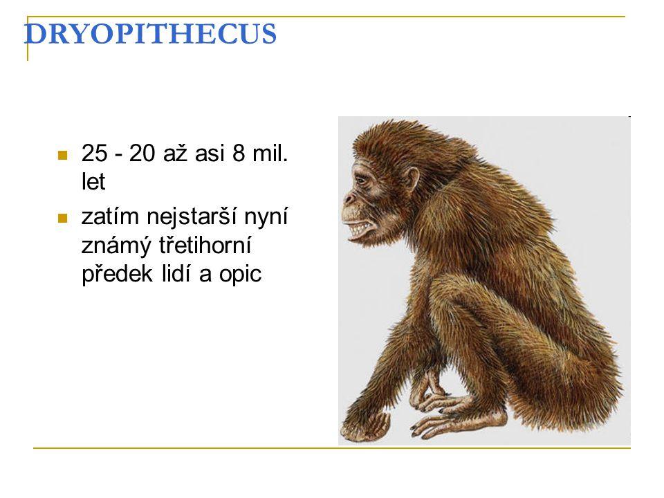 DRYOPITHECUS 25 - 20 až asi 8 mil. let zatím nejstarší nyní známý třetihorní předek lidí a opic