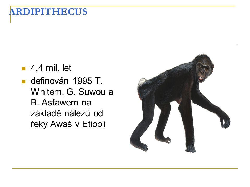 ARDIPITHECUS 4,4 mil. let definován 1995 T. Whitem, G. Suwou a B. Asfawem na základě nálezů od řeky Awaš v Etiopii