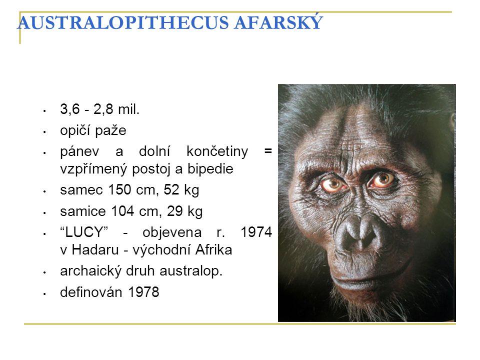 """AUSTRALOPITHECUS AFARSKÝ 3,6 - 2,8 mil. opičí paže pánev a dolní končetiny = vzpřímený postoj a bipedie samec 150 cm, 52 kg samice 104 cm, 29 kg """"LUCY"""