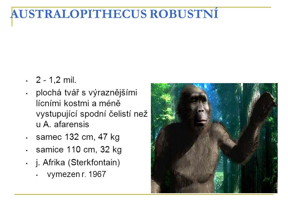 AUSTRALOPITHECUS ROBUSTNÍ 2 - 1,2 mil. plochá tvář s výraznějšími lícními kostmi a méně vystupující spodní čelistí než u A. afarensis samec 132 cm, 47