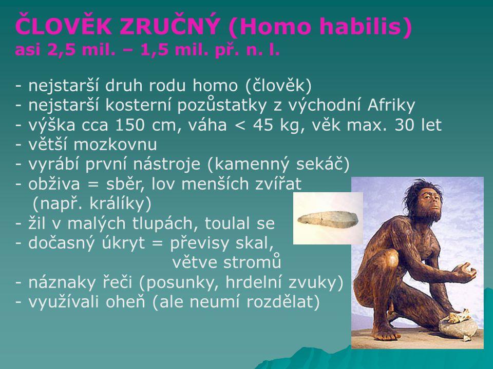 AUSTRALOPITÉK (Australopithecus) - první tvor vzdáleně podobný člověku - na Zemi asi před 3 mil.