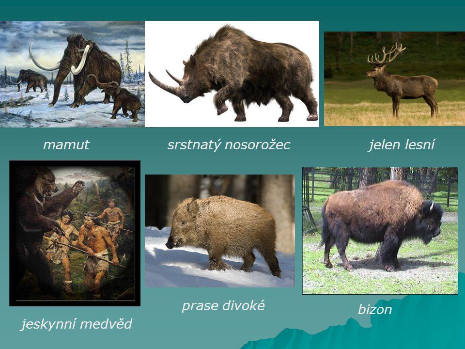 mamutsrstnatý nosorožecjelen lesní jeskynní medvěd prase divoké bizon